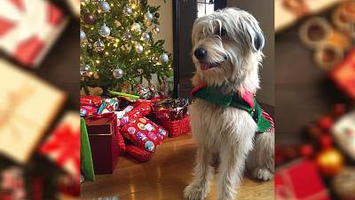 Embarrassingly, that is my dog enjoying her first Christmas after she was rescued.