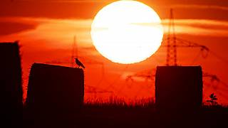 In this file photo dated Thursday, July 25, 2019, a bird sits on a straw bale on a field in Frankfurt, Germany, as the sun rises during an ongoing heatwave in Europe