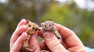 photo credits - Ashlee Benc from Kangaroo Island Land for Wildlife