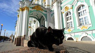 أمام متحف الأرميتاج الحكومي في سانت بطرسبرغ