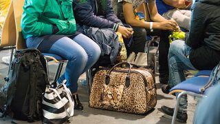 آلمان به زودی ممنوعیت اخراج مهاجران سوری را لغو میکند