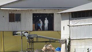 ضدعفونیسازی یک مرغداری در ژاپن، سال ۲۰۰۴