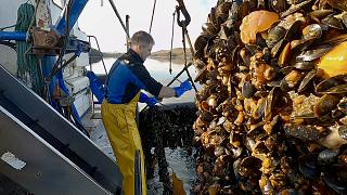 A farmer harvesting rope mussels in Ireland