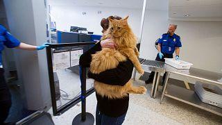 مقررات جدید برای سفر با حیوانات خانگی در دوران پسابرکسیت