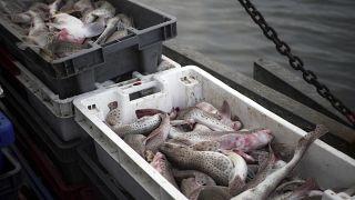 EU-Fischerei-Rat tagt mit Brexit als Damokles-Schwert