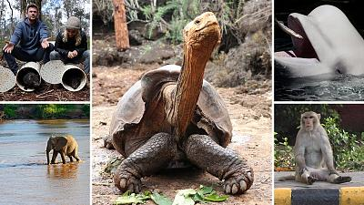 African elephants and giant tortoises among other species had a promising year in 2020.