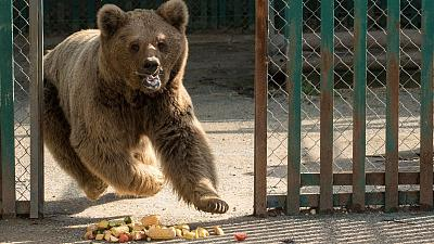 The last remaining animals from Marghazar Zoo, bears Bubloo and Suzie, have been rescued.