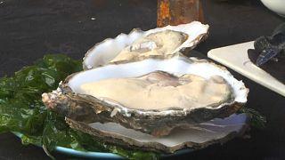 Freunde der Meeresfrucht, sie ist wieder da: Die portugiesische Felsenauster
