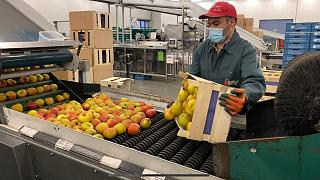 Belgium fruit production, December 2020.
