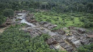 FILE: May 8, 2018 Illegally deforested area on Pirititi indigenous lands (Brazilian Environmental and Renewable Natural Resources Institute)