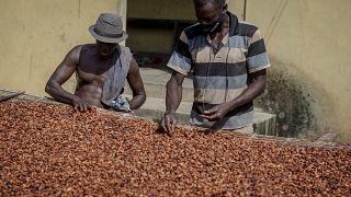 Le commerce du cacao peu lucratif pour les producteurs ghanéens