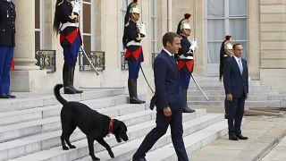 الرئيس الفرنسي إيمانويل ماكرون على درجات قصر الإليزيه، مع كلبه المتبنى نيمو.