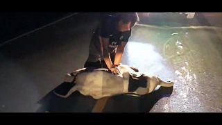 إنقاذ فيل رضيع بعد حادث اصطدام مع دراجة نارية