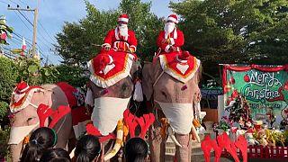 Elefantes disfrazados en Talandia