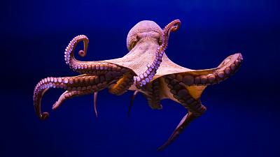 Octopuses have been found to punch fish, according to new study