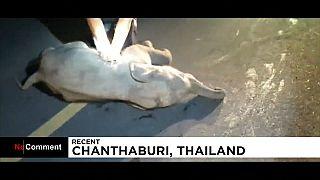 Herzmassage für den Babyelefanten