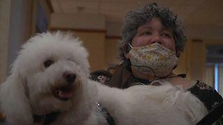 """La residencia """"Hogar Hebreo"""" confía en la terapia de perros para alegrar a sus octagenarios"""