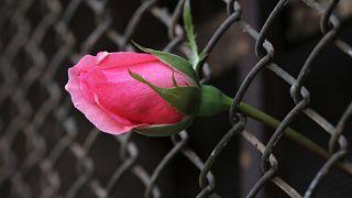منسقة أزهار تساعد سجناء هونغ كونغ على إرسال الهدايا إلى ذويهم