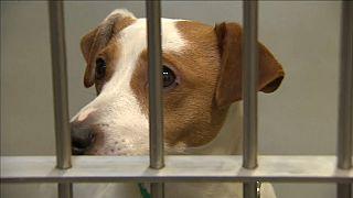 Hunde hinter Gittern