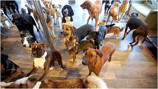 مجموعة من الكلاب - من الأرشيف