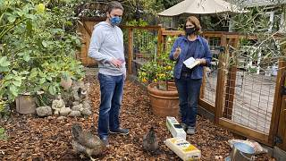 Все больше американцев пробуют заняться домашним птицеводством