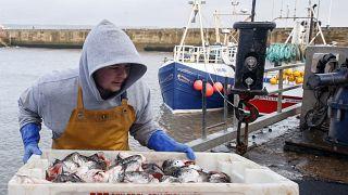 """Британское рыболовное дело сильно пострадает после """"брексита""""."""