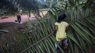 فتاة تساعد ولدها خلال عمله في حقل لزراعة نخيل الزيت