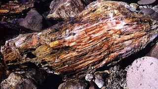 Μυτιλήνη, απολιθωμένο δάσος