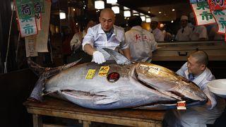 Un chef observa un atún comprado en la subasta del mercado Toyosu, Tokio