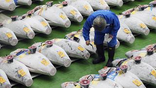 A prospective buyer inspects the quality of a frozen tuna before the first auction of the year at the newly-opened Toyosu Market,