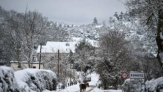 A horse walks along the road as snow covers the landscape in the small Pyrenees village of Esnotz, northern Spain, Tuesday, Jan. 5, 2021.