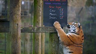 شاهد: حديقة حيوان تستقبل حيوانات مهددة بالانقراض أثناء الجائحة