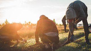Travailleurs saisonniers dans un champ de carottes Larrère près de Liposthey