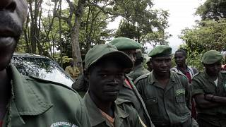 6 Virunga National Park Rangers Killed in Mai-Mai Gunmen Ambush