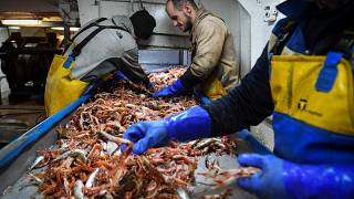 Members of the crew of the trawler 'Good Fellowship' process the day's catch after berthing in Eyemouth Harbour in the Scottish Borders, December 16, 2020 .