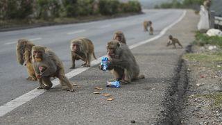 Szájmaszk: az embereket megmenti, az állatokat veszélyezteti