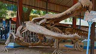Dinosaurs, living animals and crafts: Inside Niger's National Museum