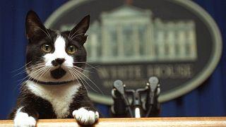 قط الرئيس السابق بيل كلينتون، البيت الأبيض في واشنطن.