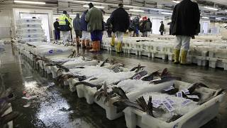 Traders work at Peterhead fish market in Peterhead, north of Aberdeen, northeast Scotland on August 27, 2014.