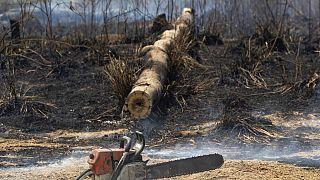 За 13 лет Земля потеряла более 40 млн гектаров леса