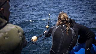 Afrique du Sud : les filets à requins mettent en danger l'espèce