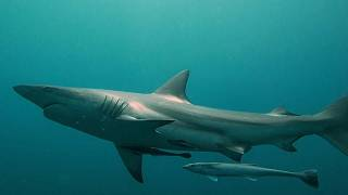شباك الموت: رادع القرش الأساسي في جنوب إفريقيا