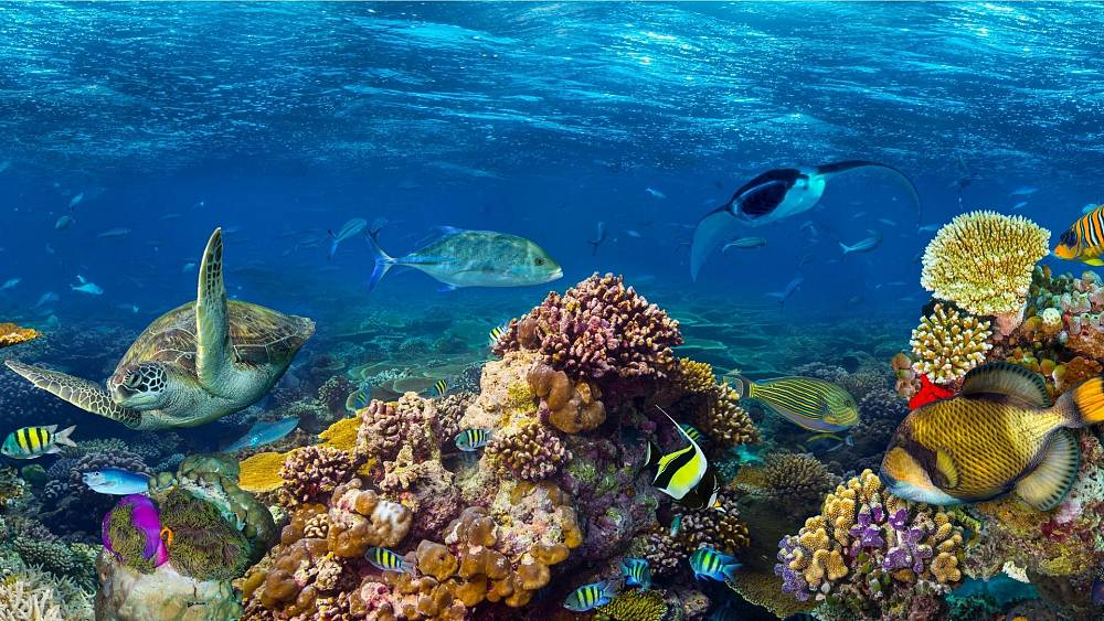 Space satellites hold the secret to saving the world's coral reefs