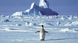 Kuzey Antarktika'daki sıcaklık 2020'de 18,3 santigrat derece ulaştı; bu, olası bir ısı rekoru olarak kayıtlara geçti