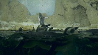 Affonda l'acquario di Genova