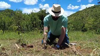 Brasile: un albero piantato per ogni morto di Covid