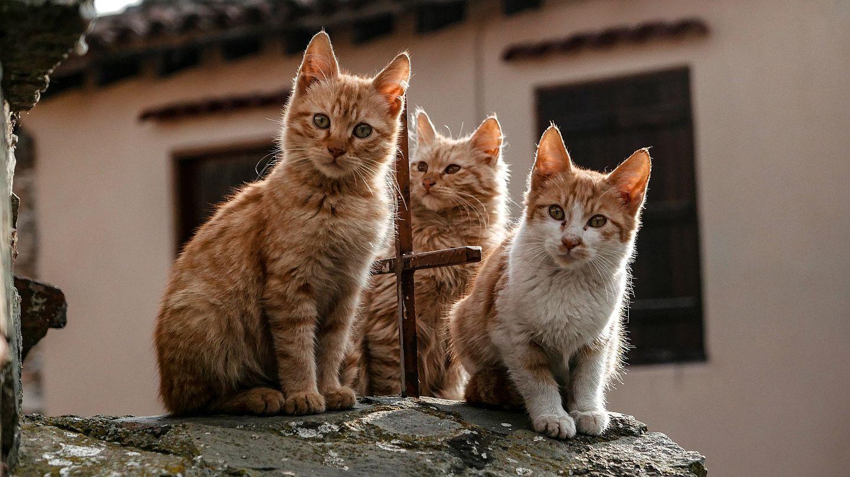 اختفاء القطط بعيد الأضحى