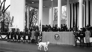 Il vicepresidente Richard Nixon ride, mentre un cane randagio partecipa alla parata inaugurale e cammina davanti alla Casa Bianca a Washington, 21/01/1957