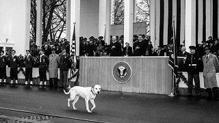 Vizepräsident Richard Nixon lacht, als sich ein streunender Hund der Inaugurationsparade anschließt und vor dem Weißen Haus in Washington, D.C. spazieren geht. 21. Januar 1957