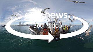 ЕС на страже океанов и качества морепродуктов